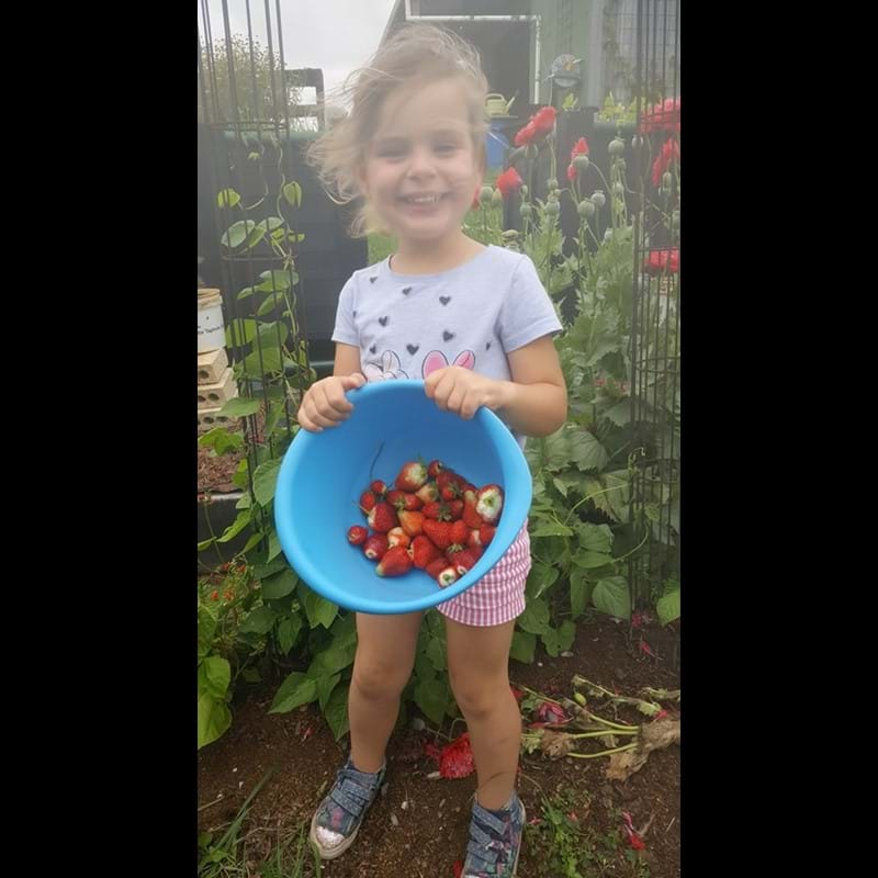 Sophie and the Strawberries