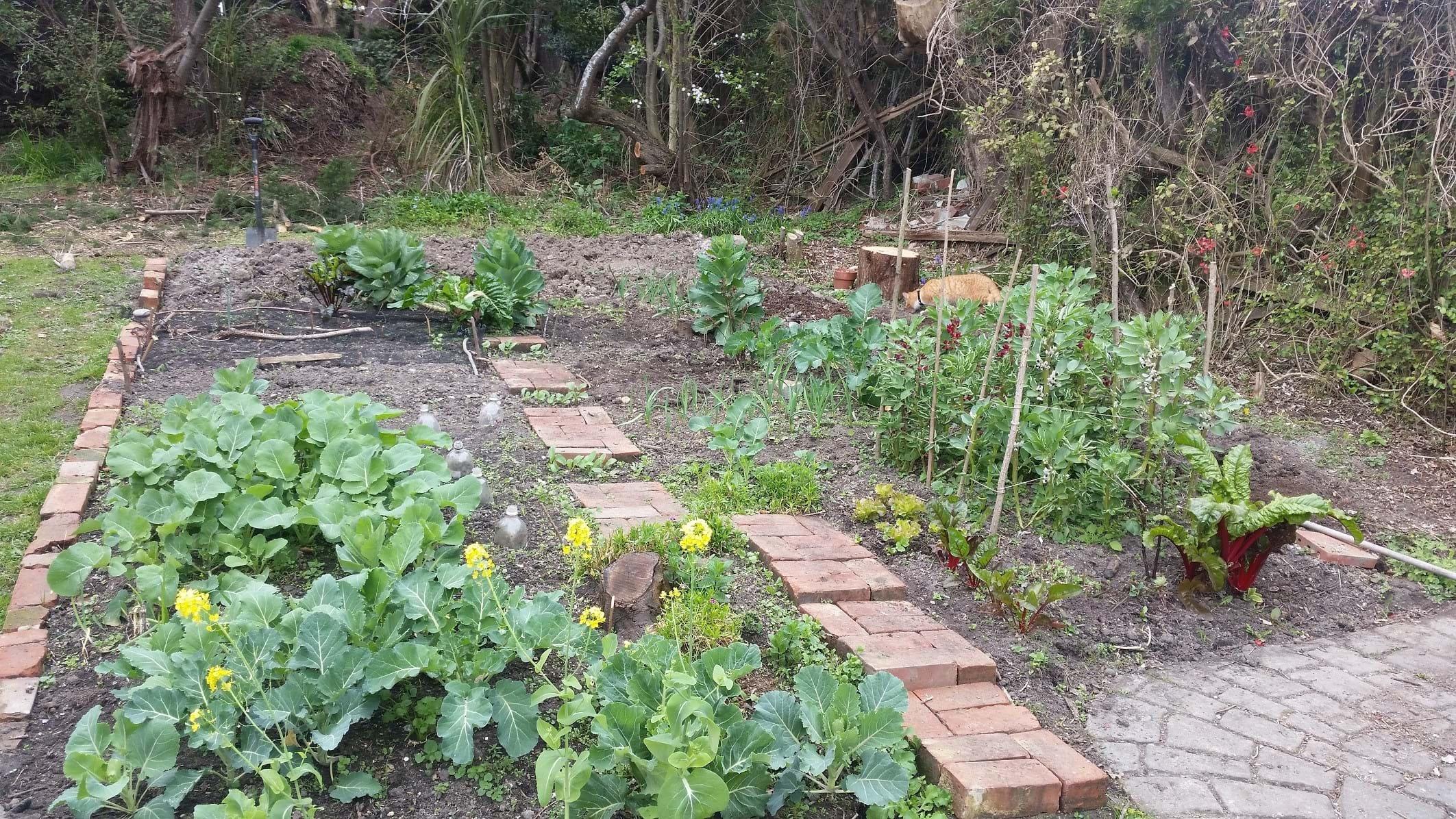 Where it began (my imperialistic gardening tendencies)