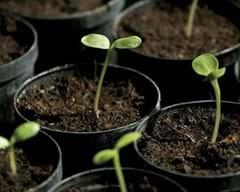 Seed Finder