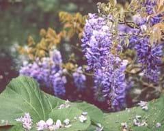 Flowers & Ornamentals