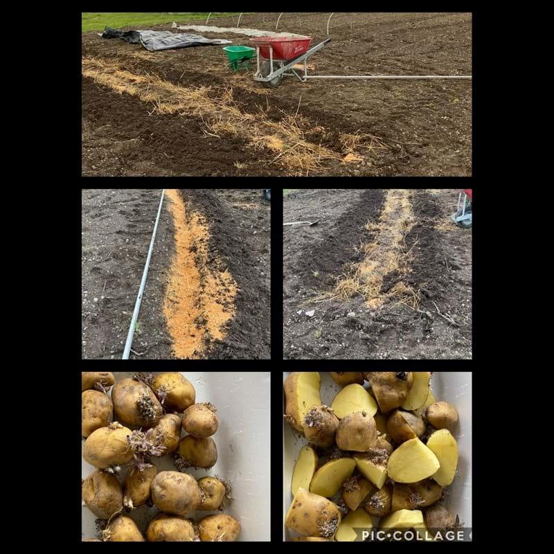 The happy potato experiment