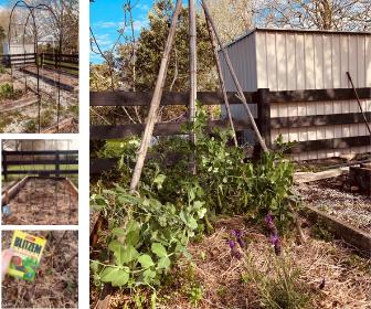 Fun with Garden Structures