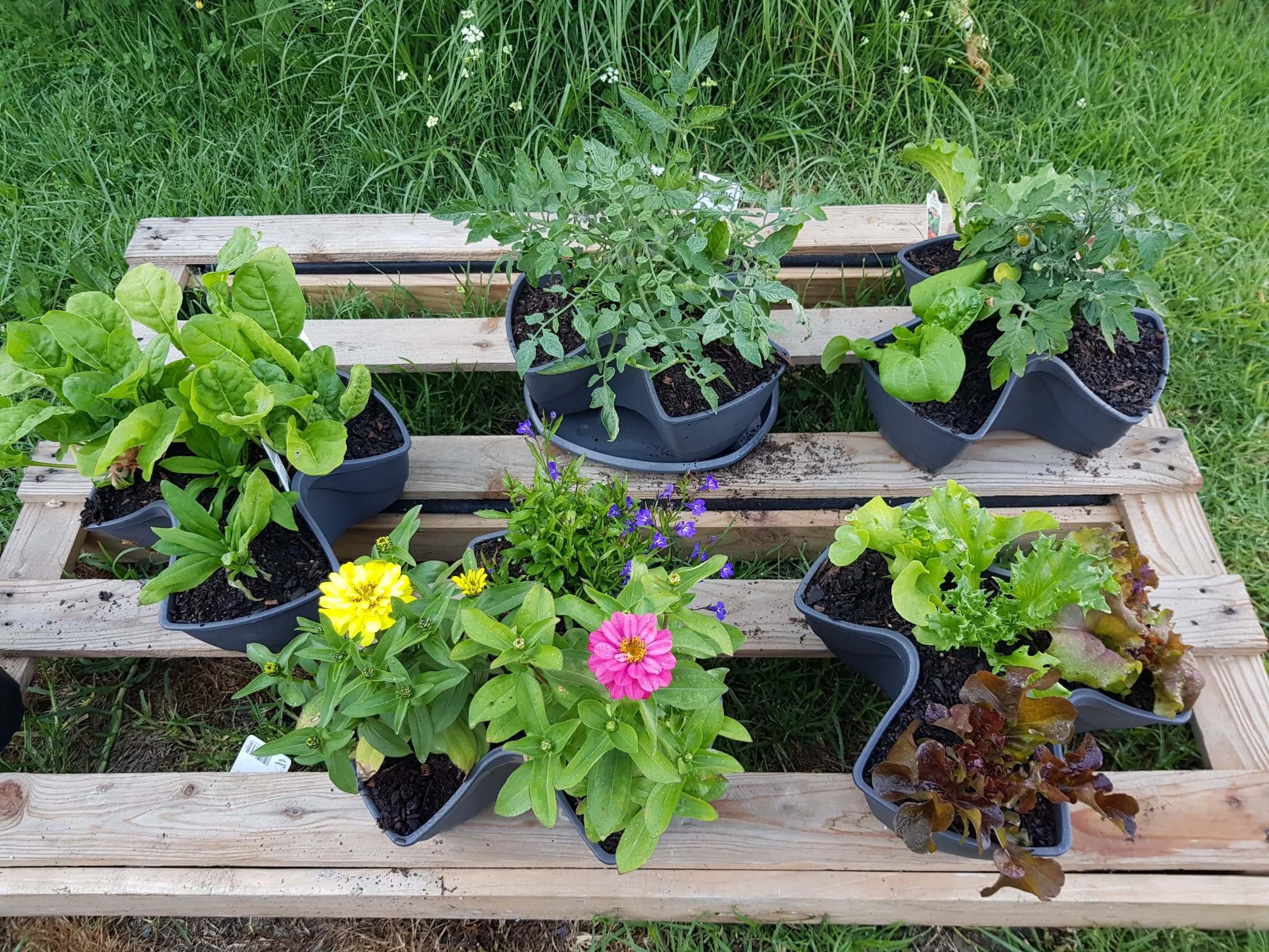 Our new little garden
