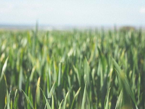 Weeds, Pests & Diseases
