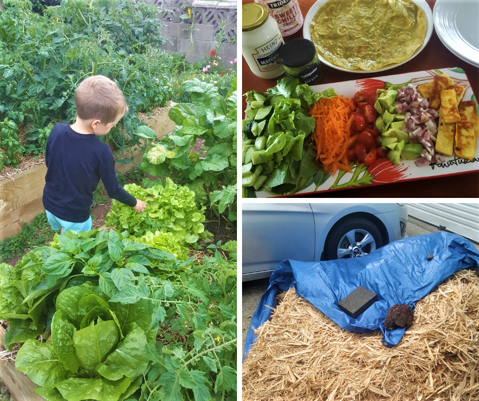 2m2 of Mulch and Dinner From the Garden