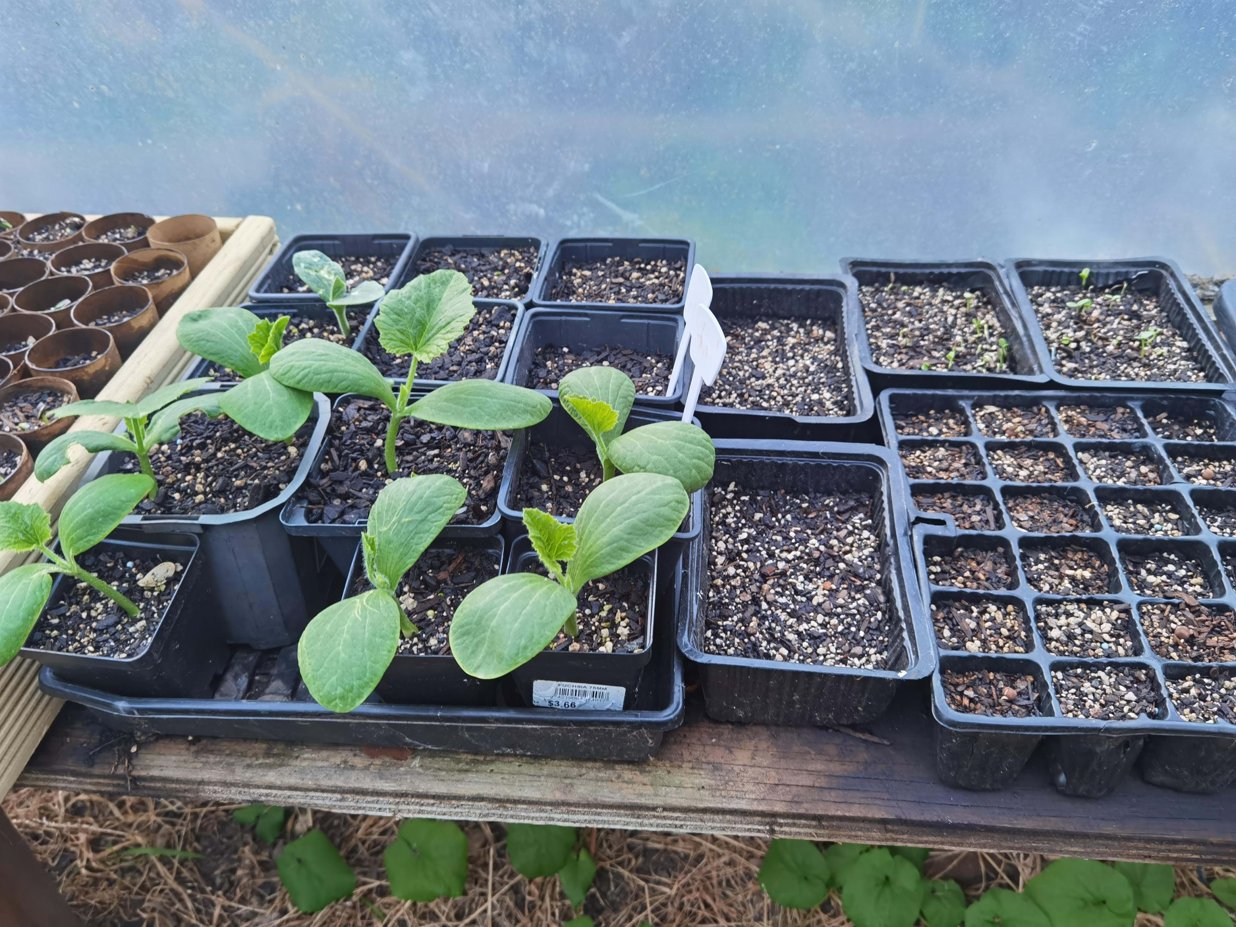 seed raising