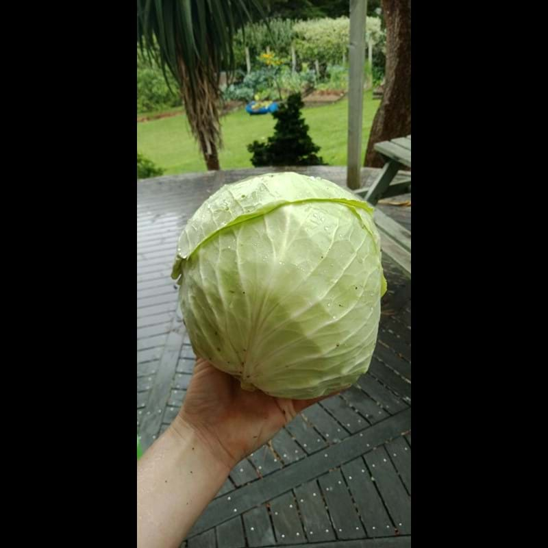 Room for Cabbages!!