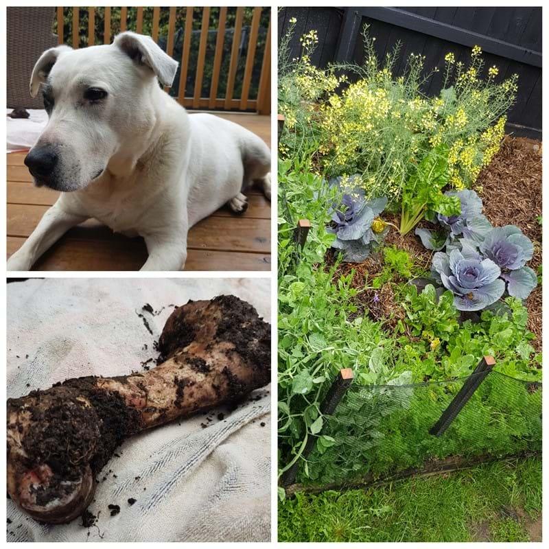 A New Gardener