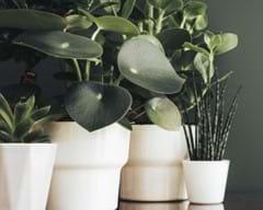 Indoor Plant Care