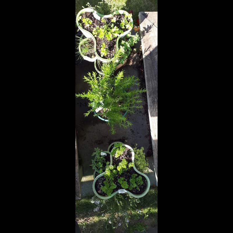 Herb garden and garden maintenance