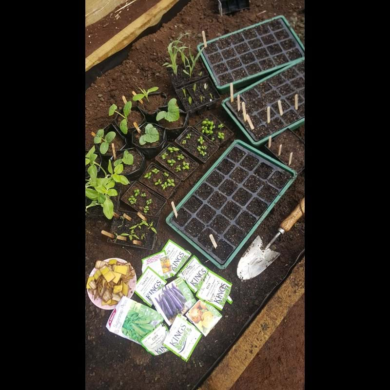 Pricking Out is a Prick of a Job