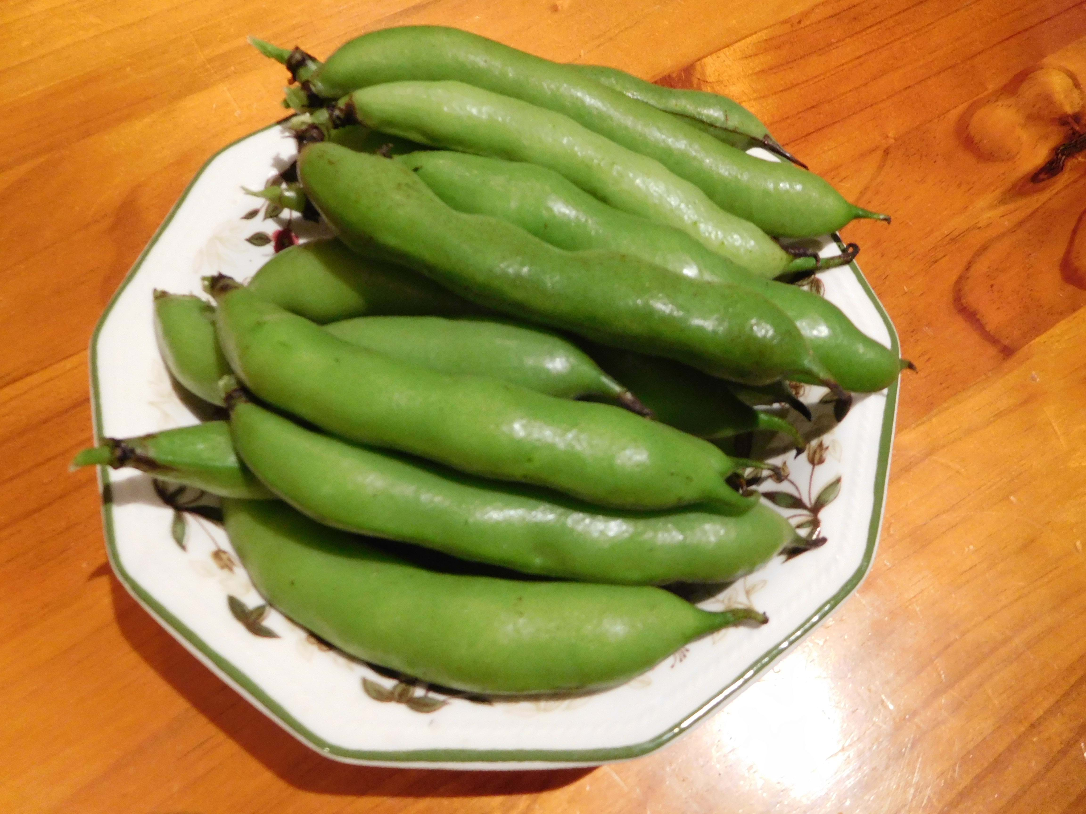 My first broad bean harvest!