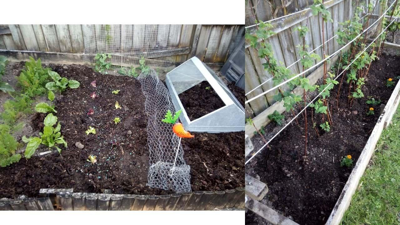 Resuming twilight gardening!