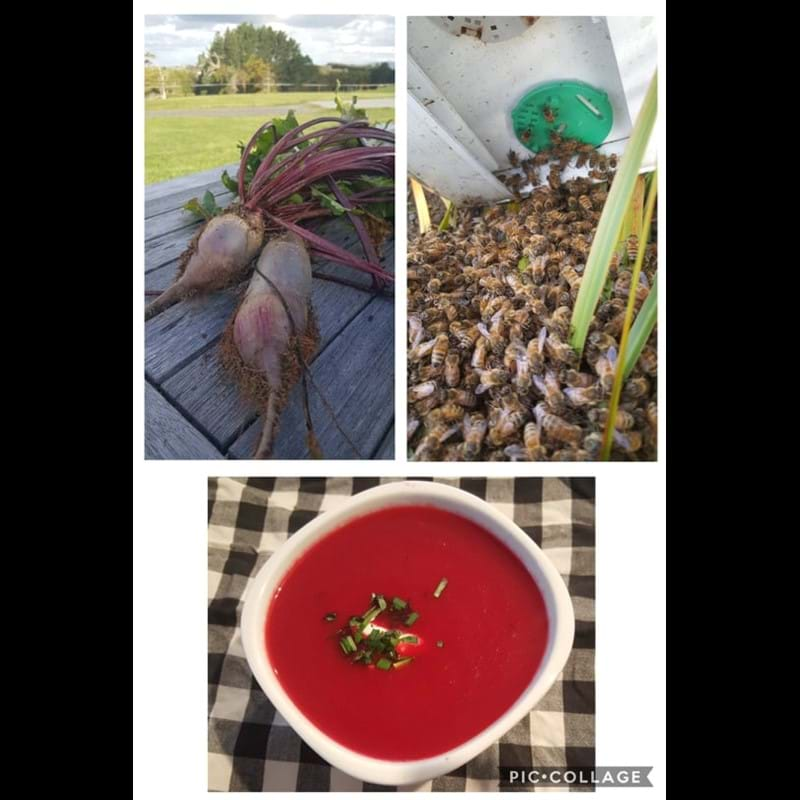 Beetroot and bees