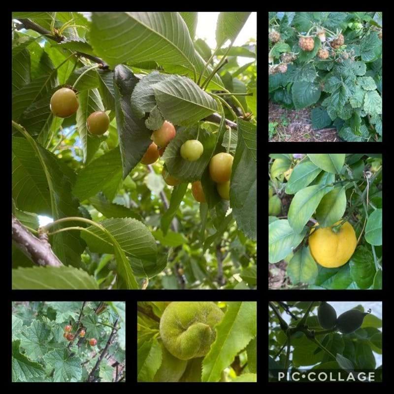 Fruitful fruits