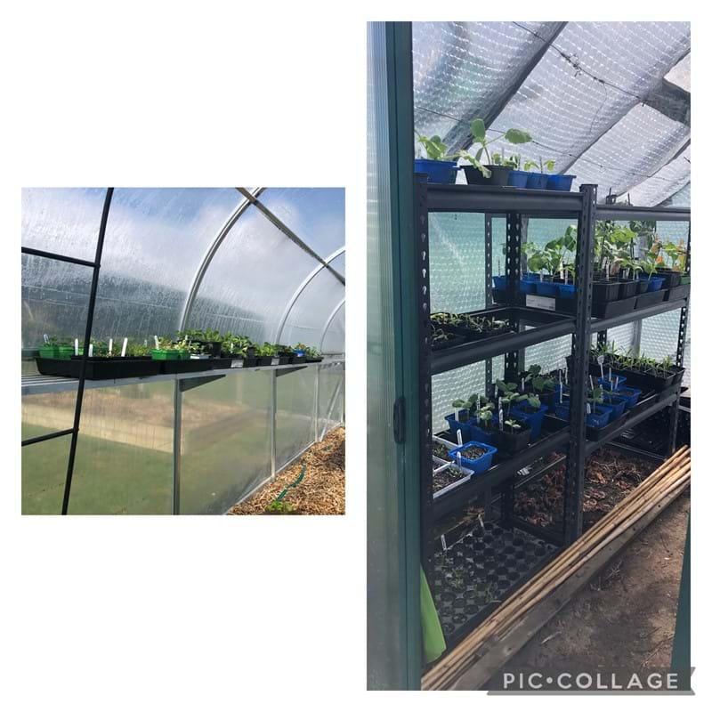 Greenhouse bursting at its seams