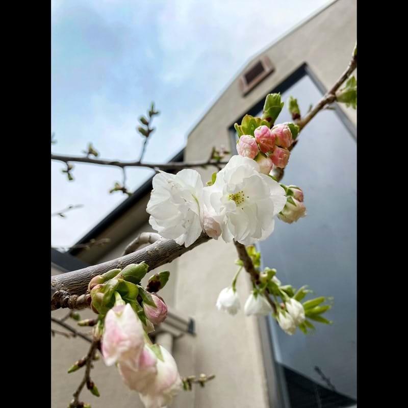 Spring is blooming & veggies booming!